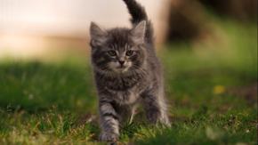 Miss Mittens's kitten