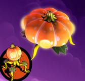 Pumpkin saucer