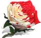 Окрашенная роза