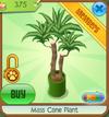 Mass Cane Plant