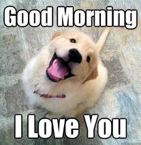Good-morning-i-love-you-goodmorning-meme
