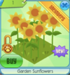 Gardensunflowers