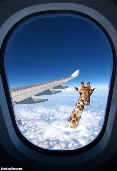 Giraffe-Through-the-Clouds--57026