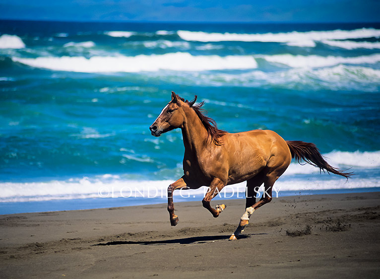 Horses of the coast aj oc wiki fandom powered by wikia horse running on the beach ca35 1392 londie publicscrutiny Gallery