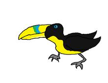 Pet toucan