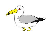 Pet seagull