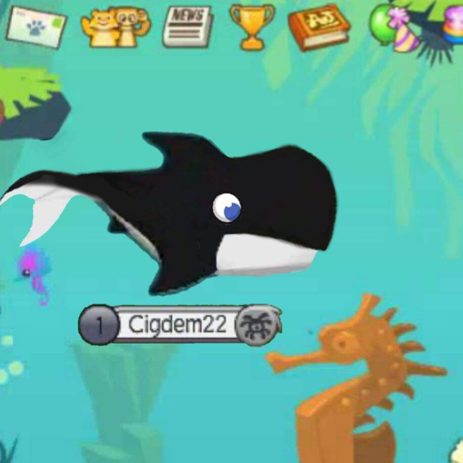 Image of: Fox Whale Deviantart Whale Animal Jam Fanon Wiki Fandom Powered By Wikia