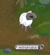 Sheep Mid-hop