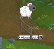 Sheep Playing