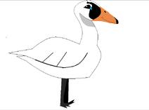 Aj swan