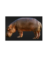 Hippo reference