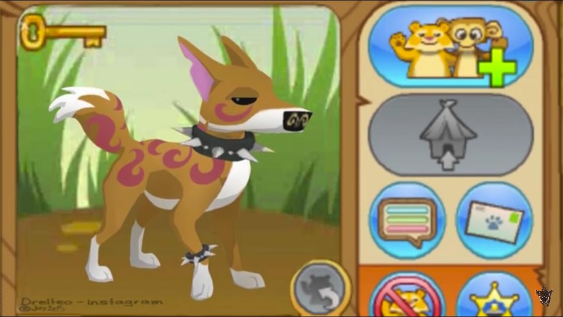 Image of: Toys Dingo Kidscreen Dingo Animal Jam Fanon Wiki Fandom Powered By Wikia