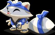 Racoon6