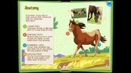 HorseEB 6