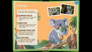 KoalaEB 6