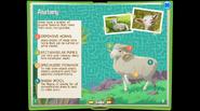 SheepEB 6