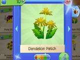 Bee's Dandelion Patch