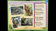 KoalaEB 5