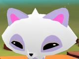 Pet Arctic Fox