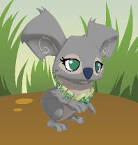 Kiara- The New Koala Alpha