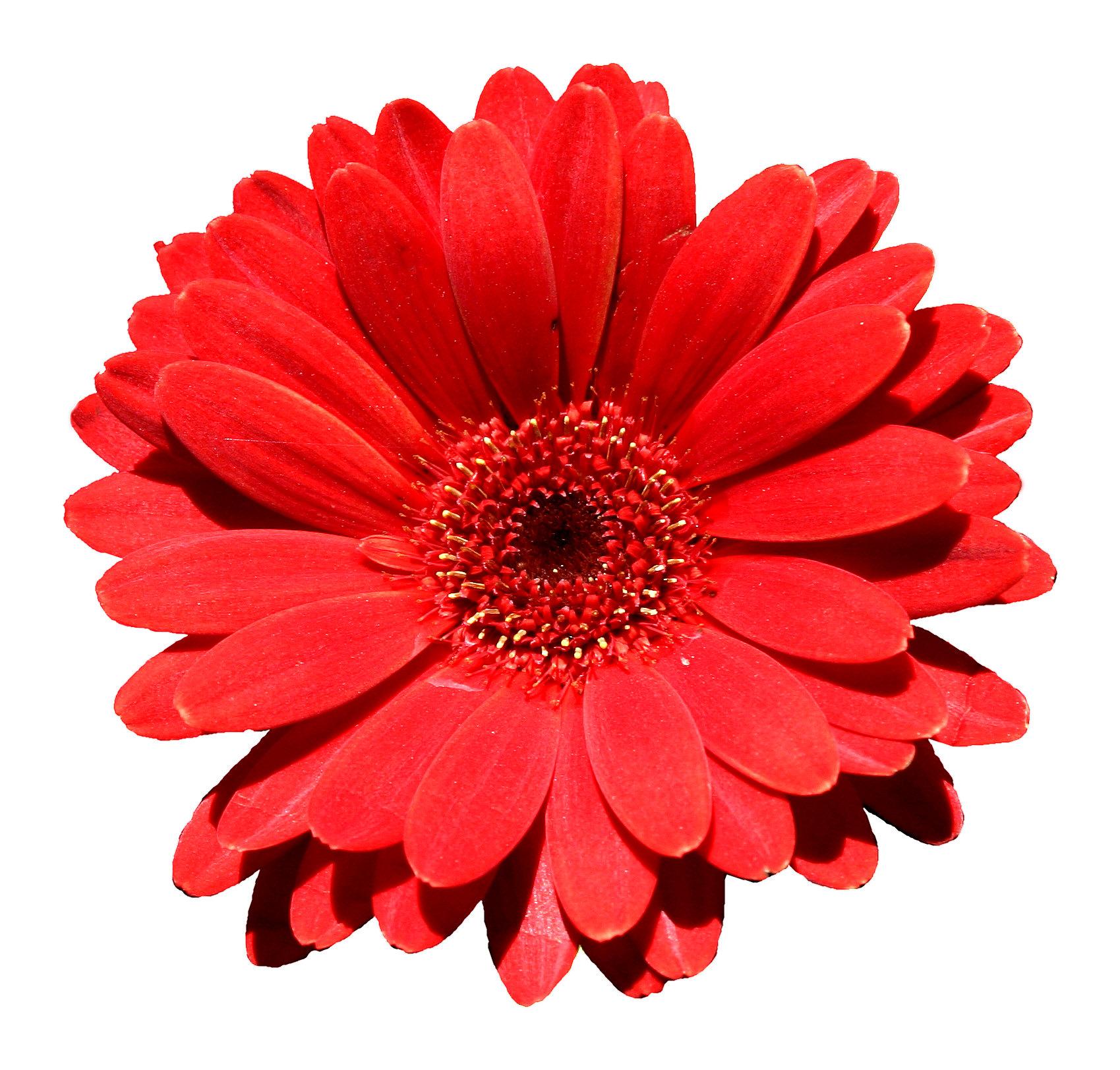 Image Flower Symbol Exampleg Akagami No Shirayukihime Wiki