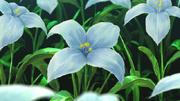Flor Toxica