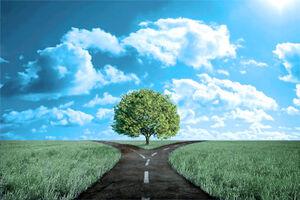 Crossroads grass