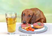 Bad-habit-short-haired-dachshund-dog-munching-sausage-from-table-c84701