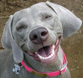 10 dogs smiling 1