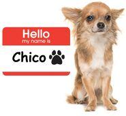 Chihuahua-chico-name