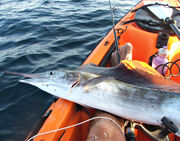 Marlin 329