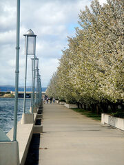 Walkway by the Water
