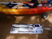 Daveyak-2-biggest-salmon