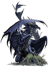 Young black dragon