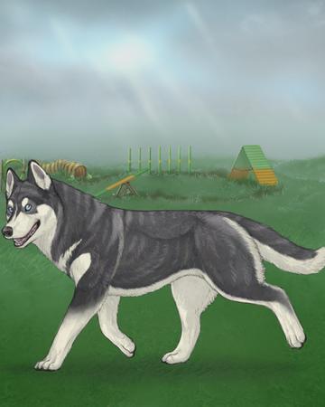 Siberian Huskies Alacrity A Virtual Dog Game Wiki Fandom