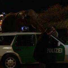 Tom wird von einem Elefanten belästigt.