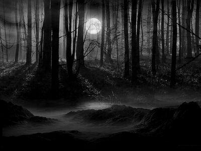 Dark.Forest (1)