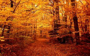 Autumn-forest-path-69100