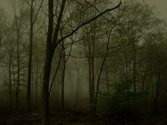 Ghost forest by schistad-d2z44fa