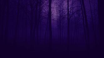 Bosque de vissum