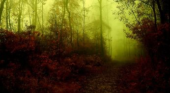 Dark forest hd wallpapers