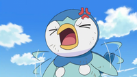 Lexi Piplup angry