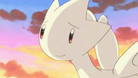 Lexi Togetic