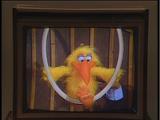 Mr. Cuckoo