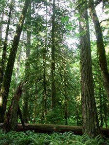 Boreal-forest-canada