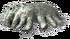 Metaxypoda-0