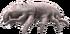 Osteopoda