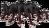 Dromaeopoda