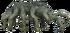 Prenobrachidae-0
