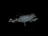 Statek Zwiadowczy Predatorów